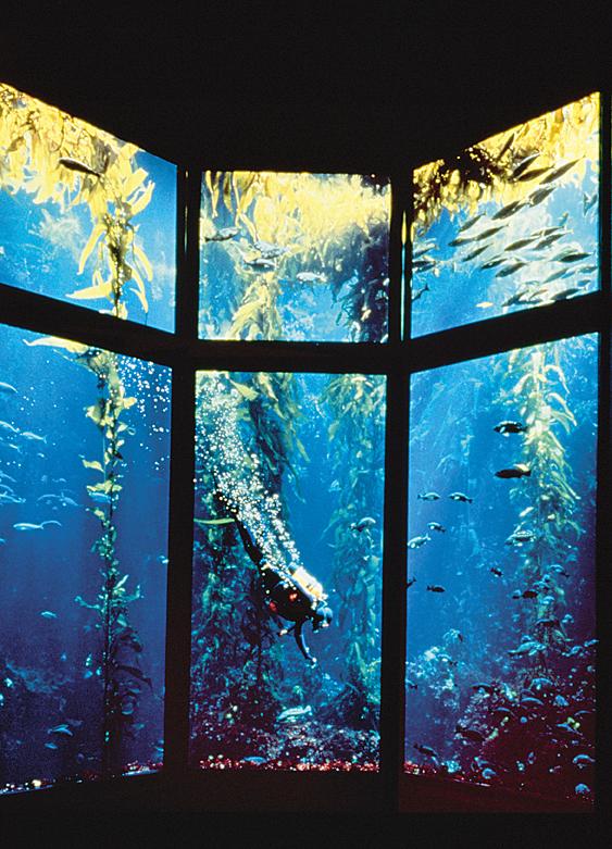 2monterey_bay_aquarium_monterey_bay_aquarium_rgb_fs