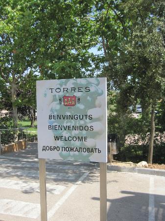 Barcelona-turisme-wine