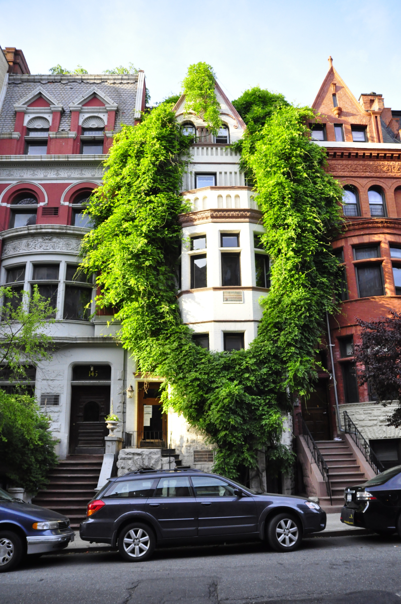 Wisteria-garlanded_building_in_Upper_West_Side_NYC