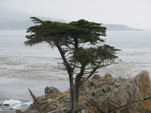 Lone Cypress- Pebble Beach